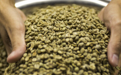 O que são grãos de café verde?