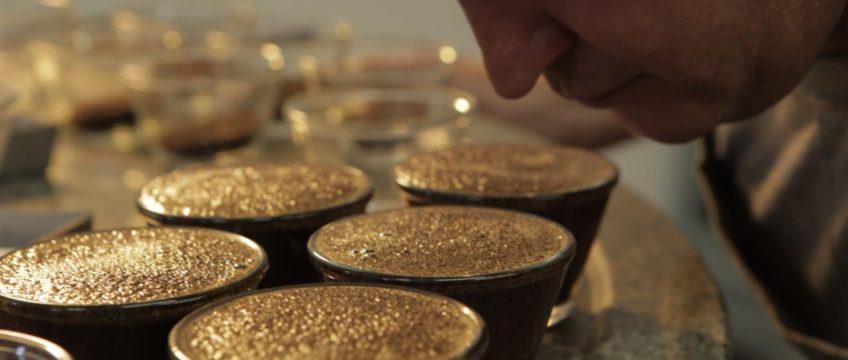 Qualidade do café verde | Classificação, Cupping e Planejamento de Produção