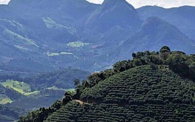 Café 100% Arábica Região das Matas de Minas   Como se consolidou no ramo