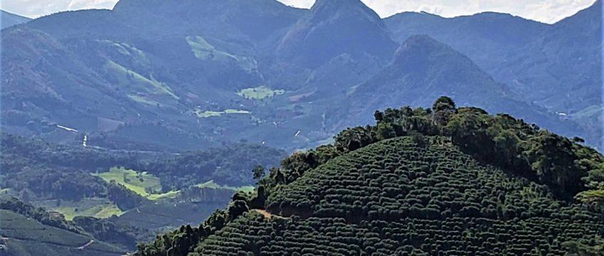 Café 100% Arábica Região das Matas de Minas | Como se consolidou no ramo